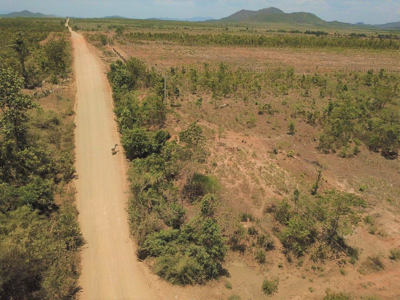 Land for Sale in Oral Moringa Farm 8.54 ha
