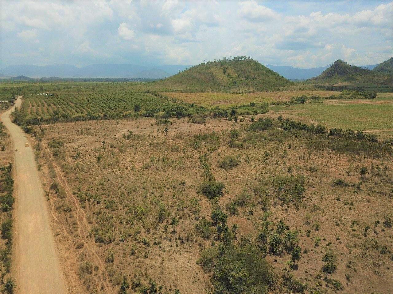 Land for Sale in Oral Moringa Farm 8.54 ha